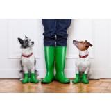 Rainy and your dog's senses